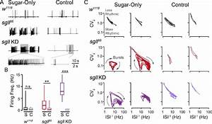 Spontaneous Spike Discharges In Flight Muscles Of Sgll