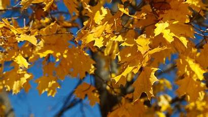 Foliage Autumn Fall Yellow