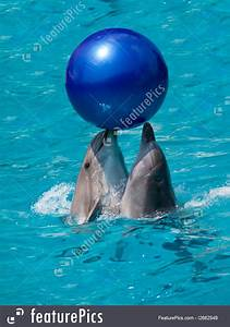 Picture Of Two Dolphins Playing With Ball
