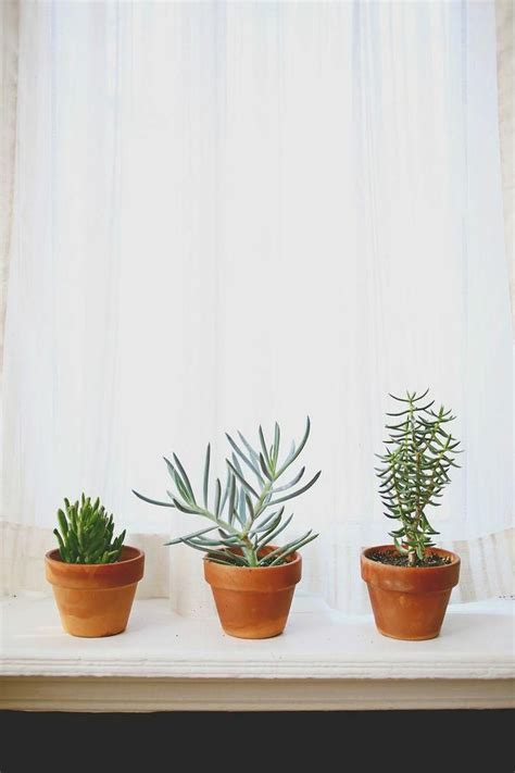 plants indoor potted succulents window interior houseplants windowsill popular succulent light simple plant care learning sturdy easy garden kitchen tips