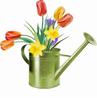 Tulips Clipart Spring Watering Water Clip Cliparts