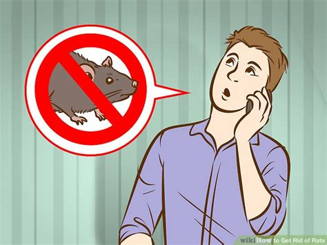 4 Ways To Get Rid Of Rats  Wikihow. University Of Md Online Degrees. Furnace Blower Won T Turn Off. Medicine For Type 2 Diabetes. Dissertation Coach Cost Lead Generation Firms. All Taylor Swift Albums Business Crm Software. Acute Lower Back Pain Treatment. Cancer Treatment Centers In California. First Time Condo Buyer Checkout Point Of Sale