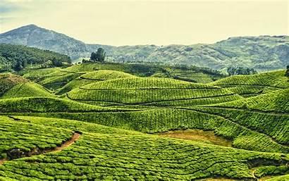 Kerala India Tea Plantation Fields Waste