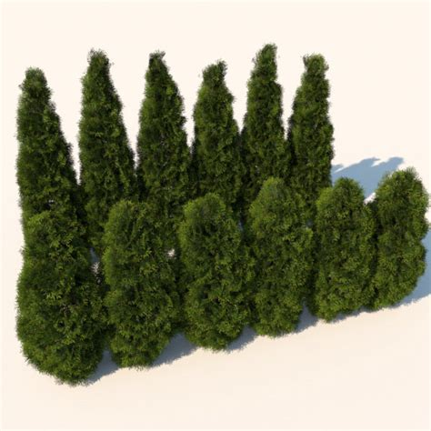 bushes shrubs cedar bushes plants 3d model