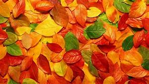 Cute, Autumn, Leaves, Hd, Wallpapers