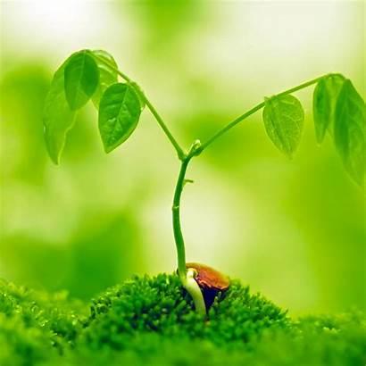 Plant Ipad Display Retina Wallpapers Plants Photosynthesis