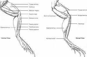 Image Result For Anatomy Of A Frog