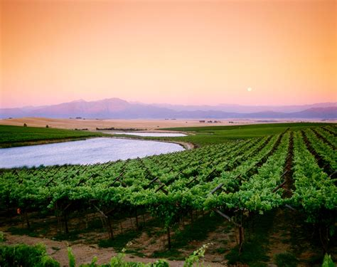 exploring  swartland   south african wine region conde nast traveler