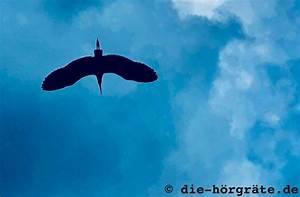 Was Tun Gegen Fliegen Unter Glasdach : 9 tipps f r flugzeug ohren was hilft gegen ohrendruck ~ Lizthompson.info Haus und Dekorationen