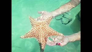 Etoile De Mer Dofus : starfish animal etoile de mer le robert martinique 972 youtube ~ Medecine-chirurgie-esthetiques.com Avis de Voitures