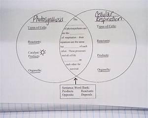 Cellular Respiration Diagram Worksheet