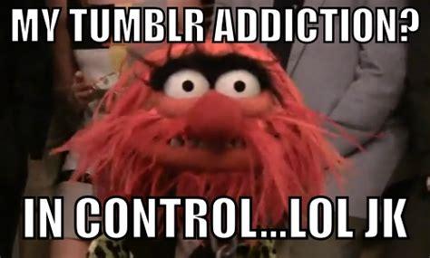 Meme Muppets - muppet memes tumblr