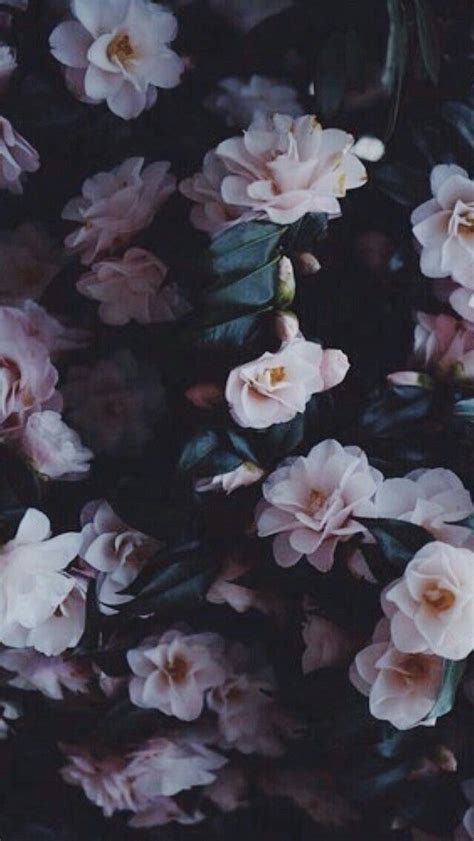 pin by manao on me flower aesthetic flowers