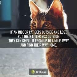 cat missing litter box 25 best ideas about litter box smell on