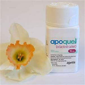is apoquel safe for dogs with allergies