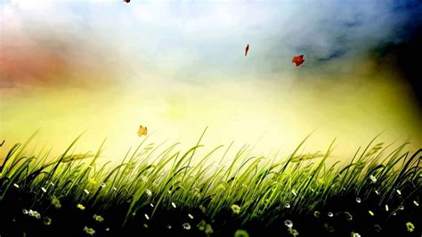 grass background video effects video effects hd