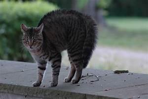 Tiere Vertreiben Ultraschall : marder und katzen tiergeschichten hunde und katzen ~ Articles-book.com Haus und Dekorationen