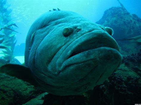 Bid Fish Big Fish Stop These Things