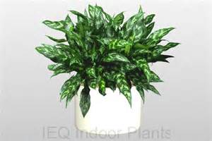 Best Low Light Indoor Plants