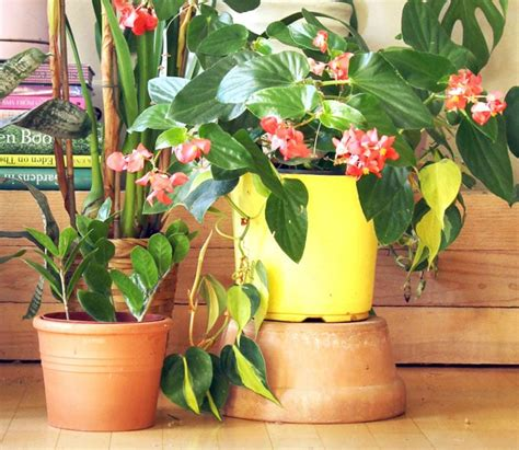 most beautiful indoor plants 5 easy care tips a piece of rainbow