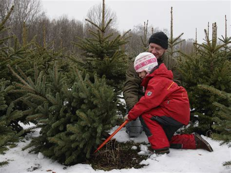 cut your own christmas tree lexington ky the river valley at keller williams