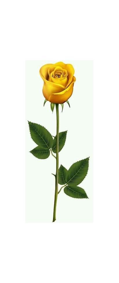 Rose Yellow Stem Roses Clip Clipart Transparent