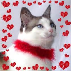 cat related gifts valentines gift for cal lover trendy mods