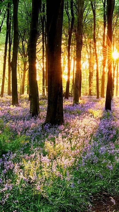 Spring Iphone Nature Still Know God Kjv