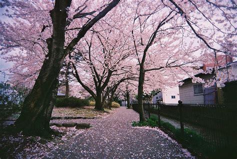 photography japan landscape floral photo set englishsnow