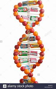 DNA double helix model made of gum balls and candy boxes ...