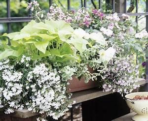 Blumenkästen Bepflanzen Ideen : balkonkasten mit lobelien begonien und impatiens zimmerpflanzen balkon terrasse ~ Eleganceandgraceweddings.com Haus und Dekorationen