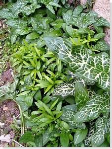 Fausse Plante Verte : plante verte exterieur jardin l 39 atelier des fleurs ~ Teatrodelosmanantiales.com Idées de Décoration