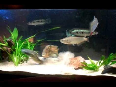 aquarium 500 liter aquarium 500 liter