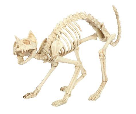seasons  halloween prop cat skeleton decor  yard  lifeandhomecom