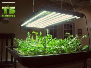 t5 grow lights for indoor plants benefits from growing plants with t5 lights t5 grow