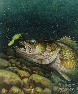 Walleye And Crank Bait Painting by Jon Q Wright