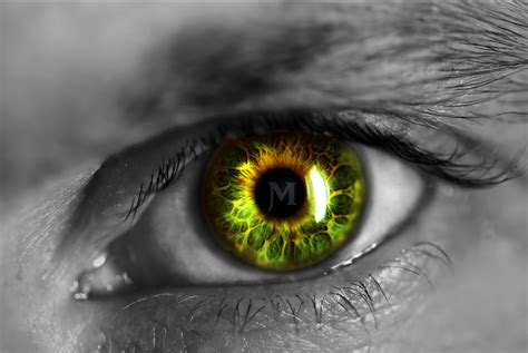Green Man Eye Wallpaper And Background Image 1491x999