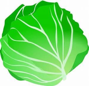 Cabbage Clip Art at Clker.com - vector clip art online ...