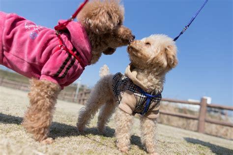 dog breed     owner