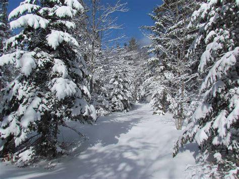 winter wonderland pictures  wallpapers