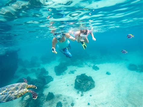 3 snorkeling spots to check out things to do in st pete