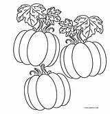 Pumpkin Coloring Pages Pumpkins Printable Patch Cool2bkids Preschool Halloween sketch template