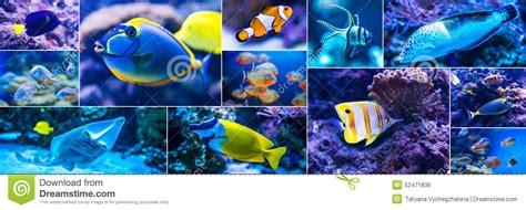poisson de mer pour aquarium poissons color 233 s en monde d eau de mer d aquarium photo stock image 52471836