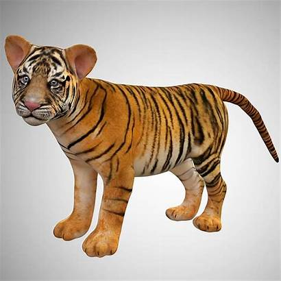 Tiger Cub Poly Low Rigged