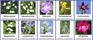 Blumenarten Az Mit Bild : blumennamen zusammensetzen l sung medienwerkstatt wissen 2006 2017 medienwerkstatt ~ Whattoseeinmadrid.com Haus und Dekorationen