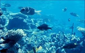 10 Interesting Facts about the Marine Biome | In Fact ...
