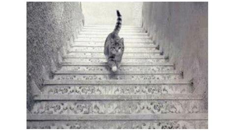 illusion d optique la perspective du chat