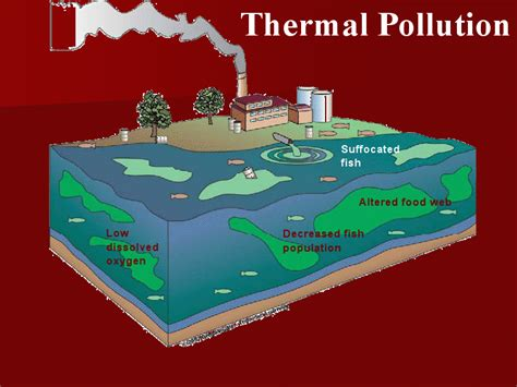 effects  thermal pollution