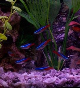 1000 images about Fish Tank on Pinterest
