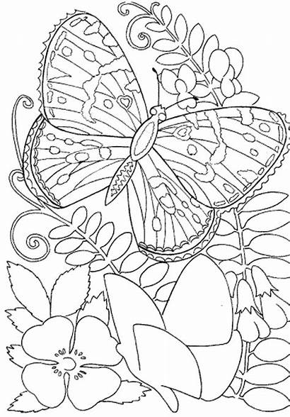 Coloring Pages Adult Owl Adults Printable Detailed